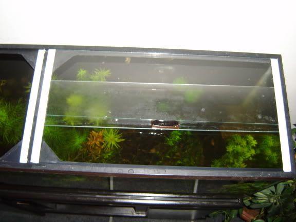 Diy Aquarium Sliding Gl Cover