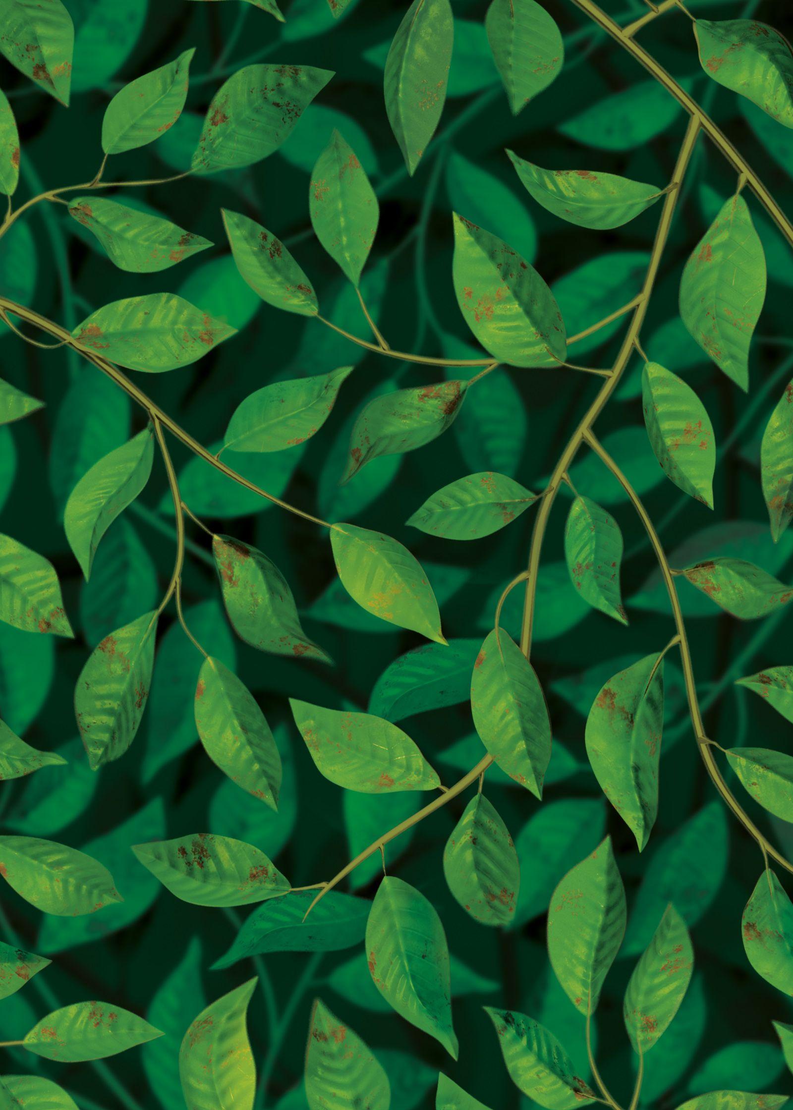 A Million Leaves Supersized Dark Green Floral Wallpaper Dark