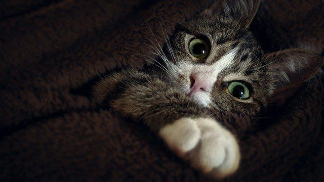 5 Simple Tips to Stop Your Kitten Biting Cute cats and