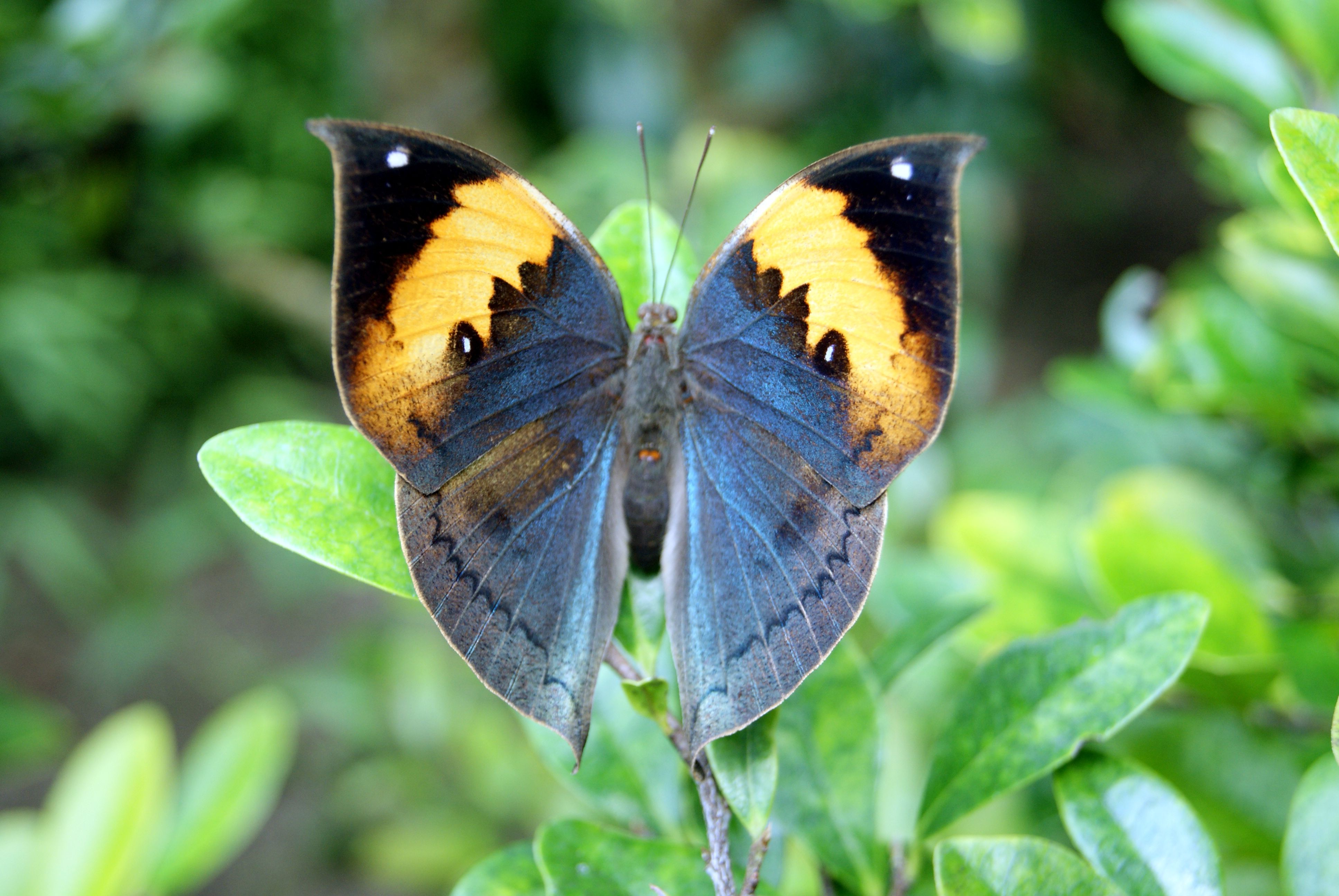 Real World Fatos: As borboletas mais incríveis do mundo