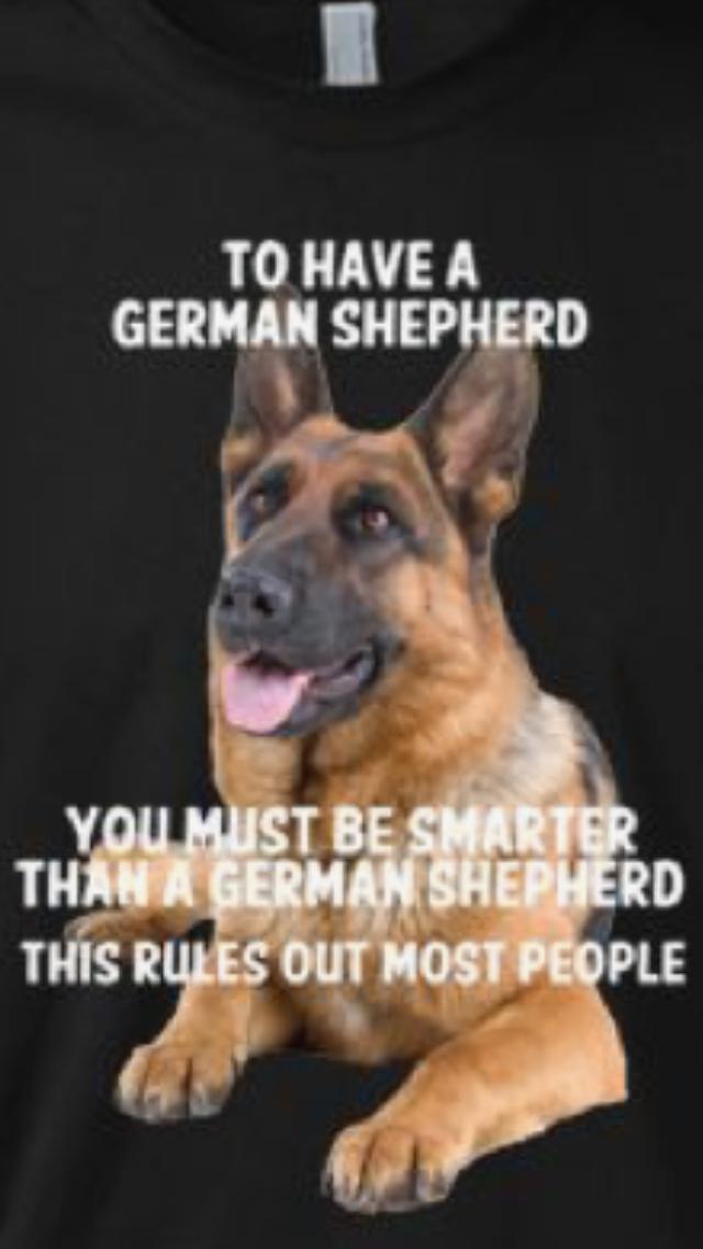 The German Shepherd German Shepherd German Shepherd Funny German Shepherd Quotes
