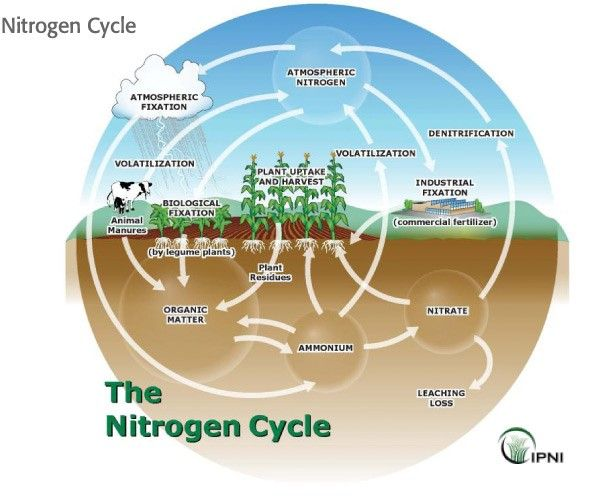 Easy Nitrogen Cycle Diagram Nitrogen Cycle Nitrogen Cycle