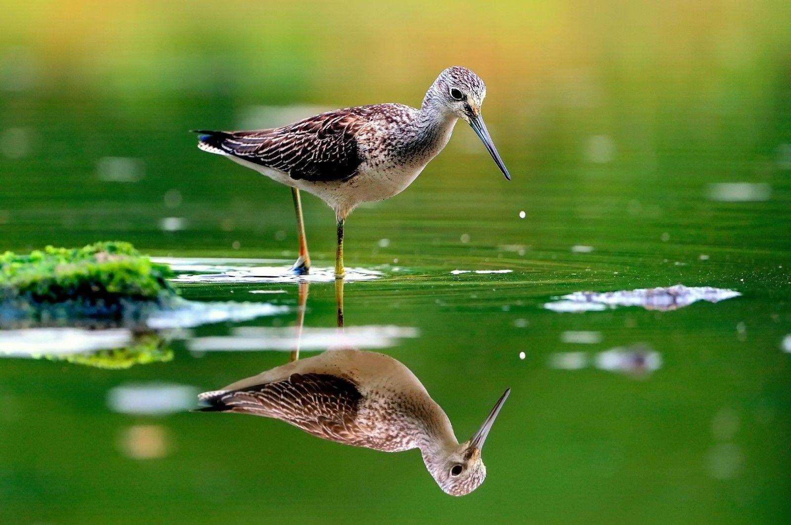 La Reflexion Del Agua Naturaleza Animal Pajaro Verde Hd Wallpapers