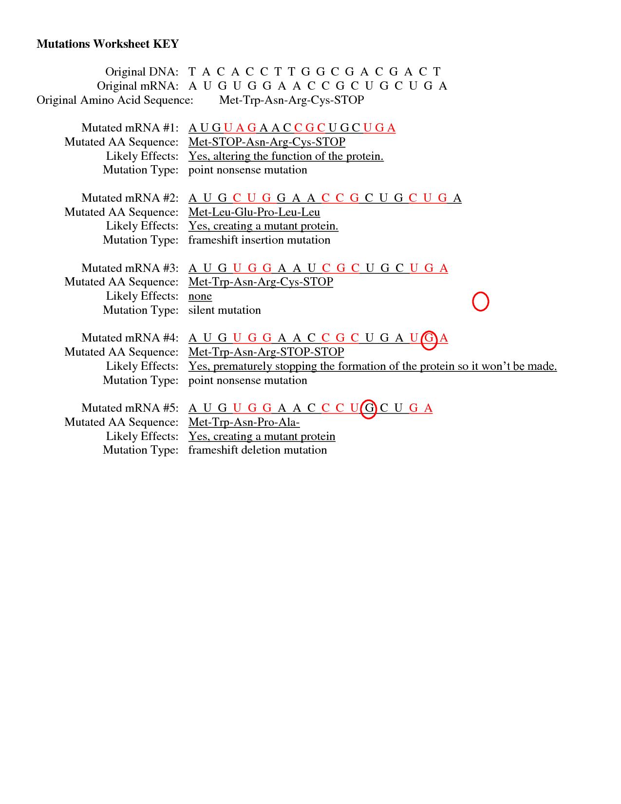 Gene Mutations Worksheet - worksheet