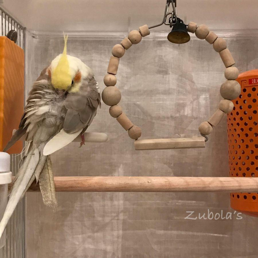 オカメインコのブランコとヒーター オカメインコ 鳥 かわいい セキセイインコ