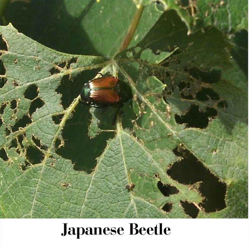 Pin On Bug/Weed/Pest/Disease