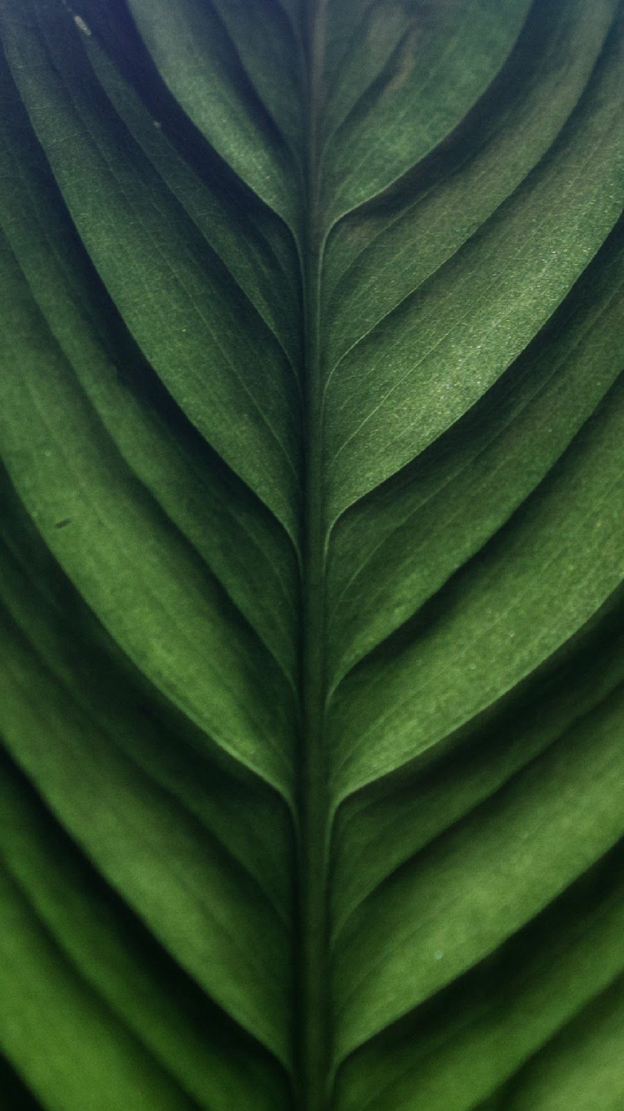 Get Great Green And Black Wallpaper Iphone for iPhone 11 2020