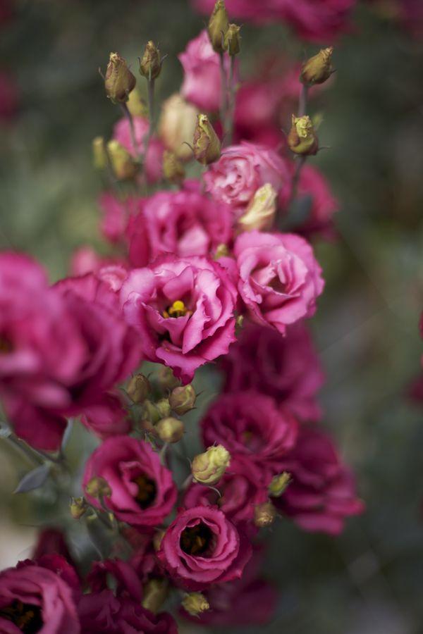 Flirty Fleurs The Florist Blog Inspiration For Floral Designers September Flowers Lisianthus Flowers Beautiful Flowers