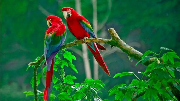 Earth Pics On Twitter Parrot Wallpaper Beautiful Bird Wallpaper Colorful Parrots A wallpaper hd download mp3