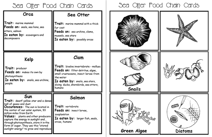 Here's a series of picture/fact cards for studying the sea