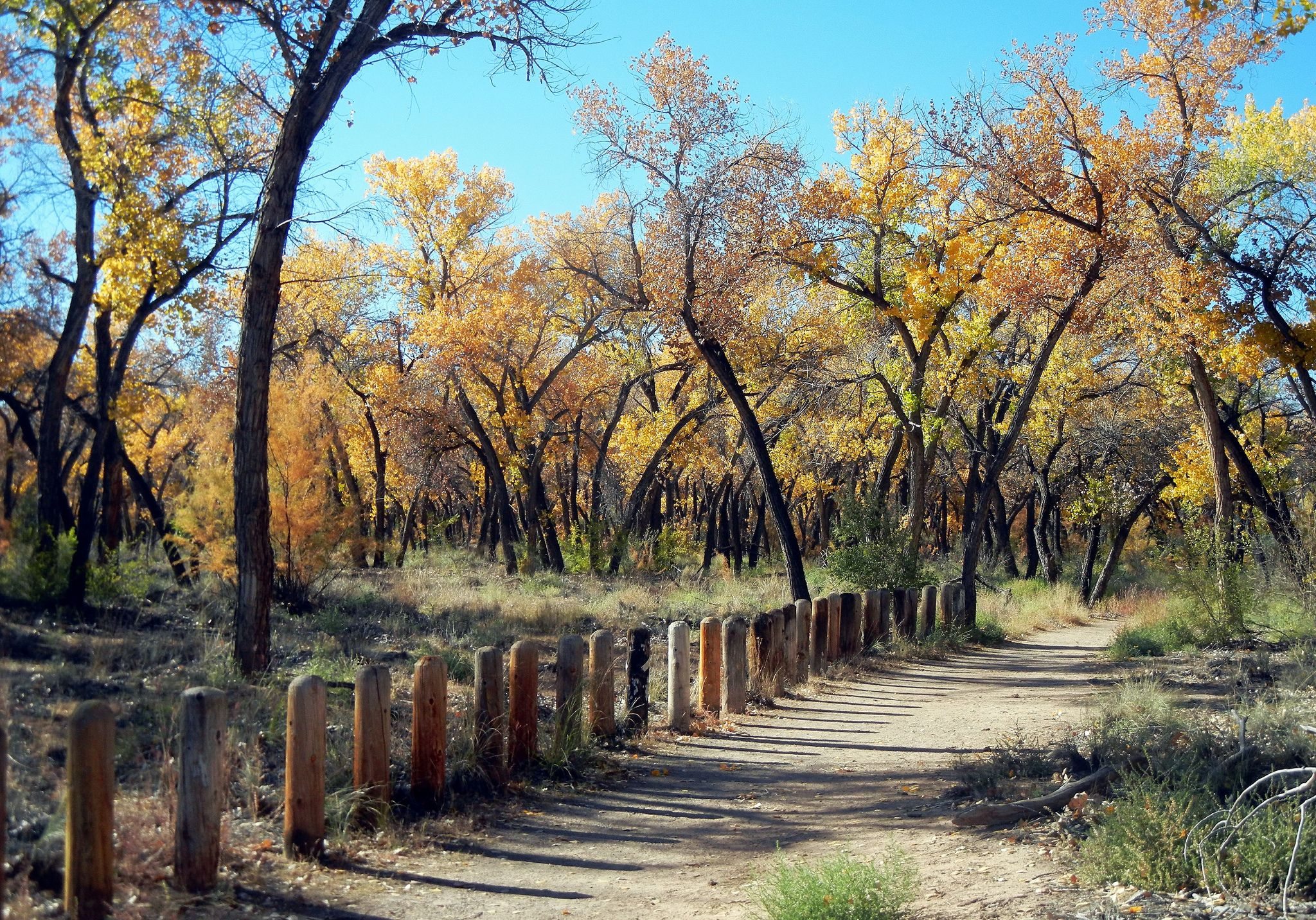 Bosque Trail; Albuquerque, NM, Rio Grande Nature Center, [Lou Feltz ...