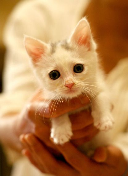 You Won T Believe How This Kitten Was Rescued Video Kitten