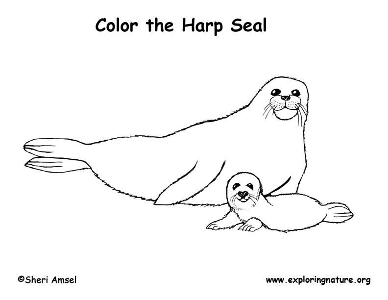 color the harp seals crafts and other ideas pinterest art rh pinterest com