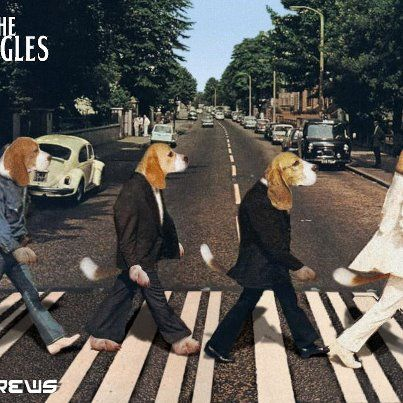 The Beagles Beatles Albums Beatles Poster Cool Album Covers