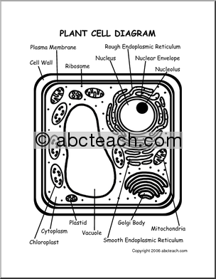 Three interactive activities to practice cell part