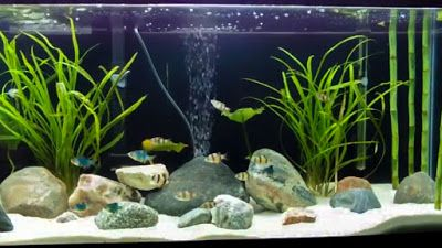 We all loves our pet fish but they need some special care