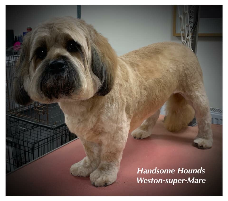 #Courses #doggrooming #Somerset #WestonSuperMare #Dogs