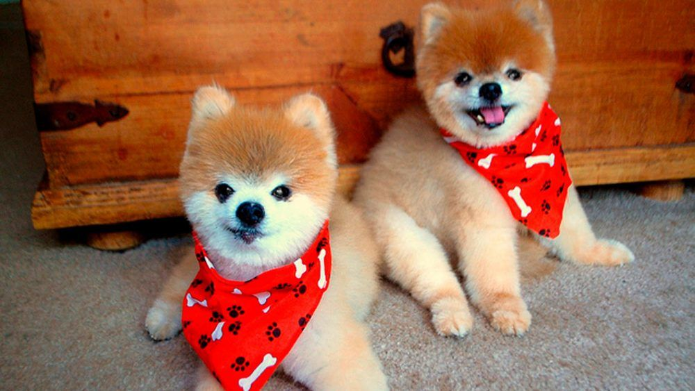 Online Shopping For Pets Clothing Accessories With Free
