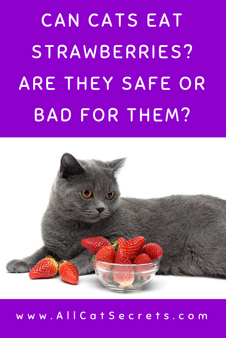 Can Cats Eat Strawberries? Are They Safe Or Bad For Them