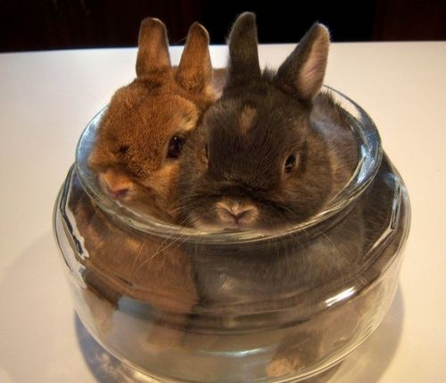 Two rabbits in a jar!