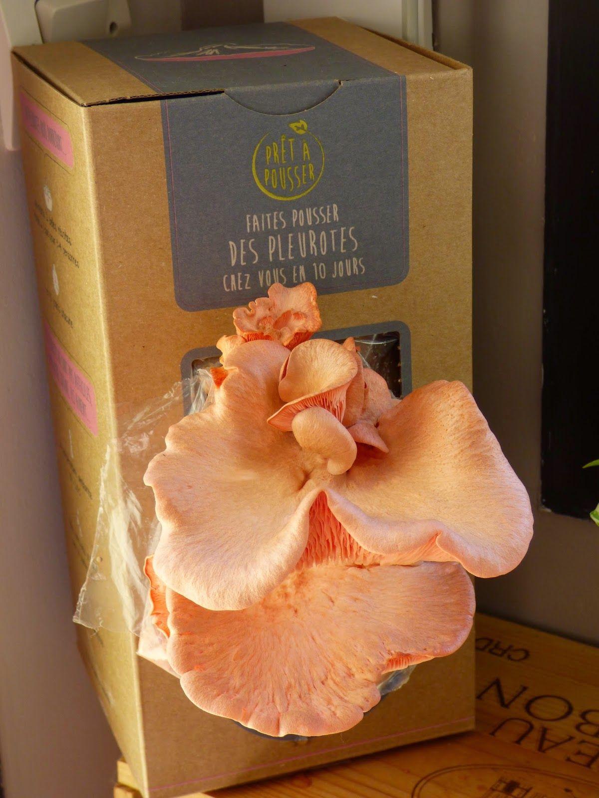 faire pousser des champignons la maison rigolo avec les enfants pr t pousser une. Black Bedroom Furniture Sets. Home Design Ideas
