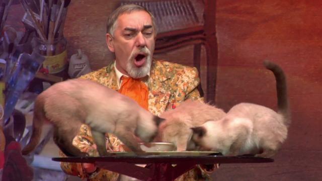 Curioso circo de gatos.