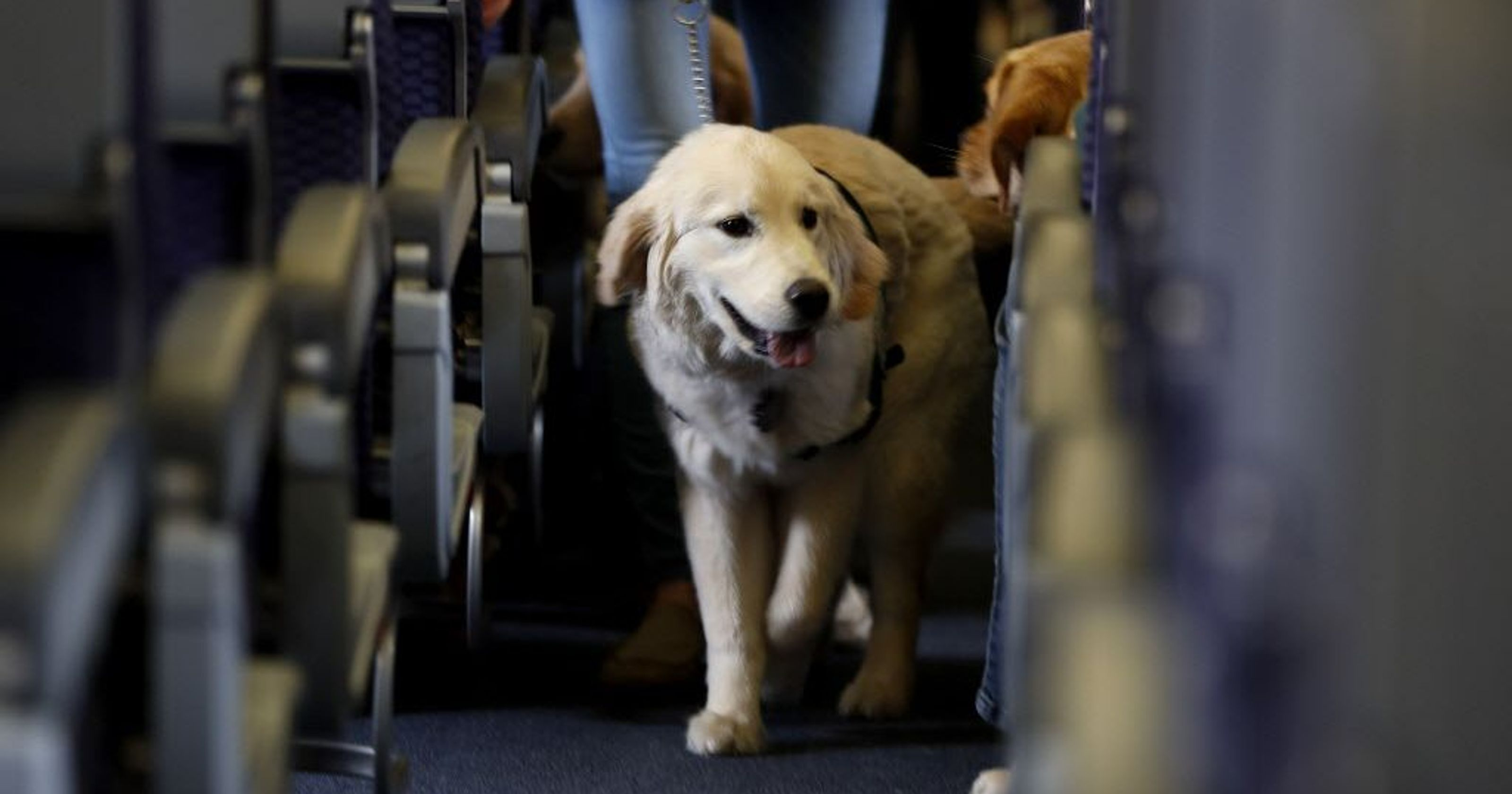 United Airlines Tightens Rules on Emotional Support