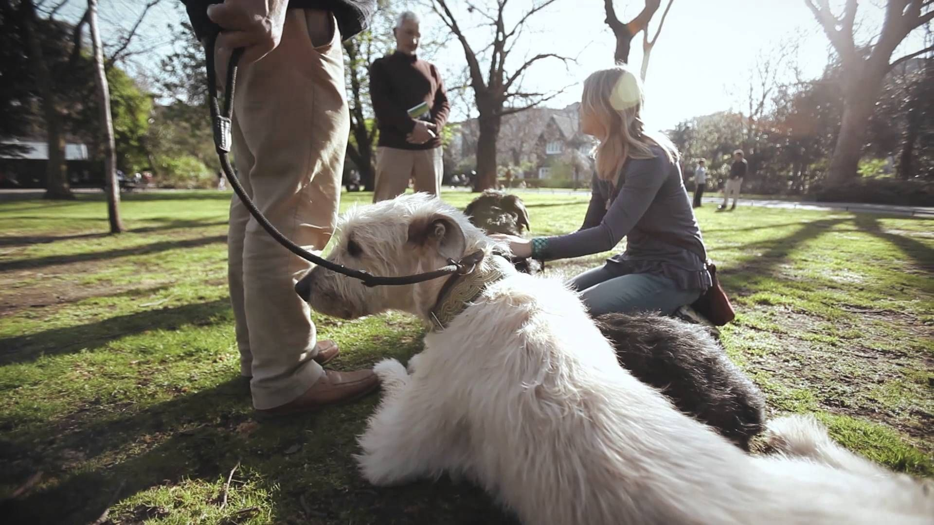 World's Greatest Pets The Irish Wolfhound YouTube