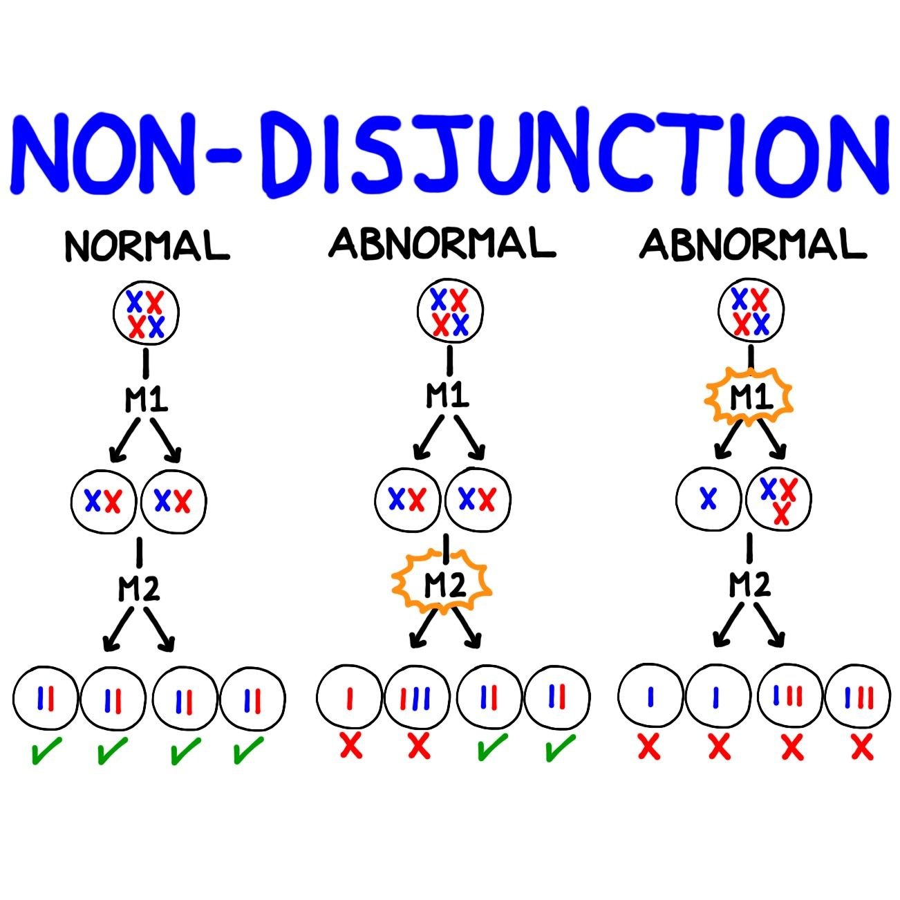 Pin By Bogobiology On Diagrams Chromosomal Abnormalities Abnormal Words [ 1302 x 1302 Pixel ]