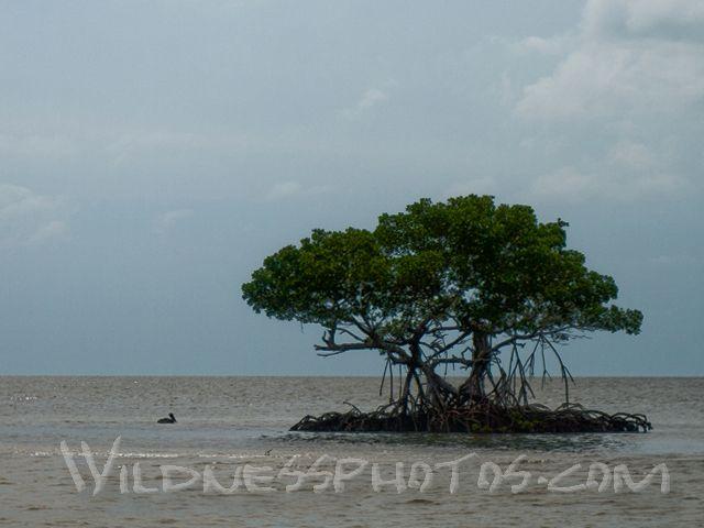 10000 Islands - Florida