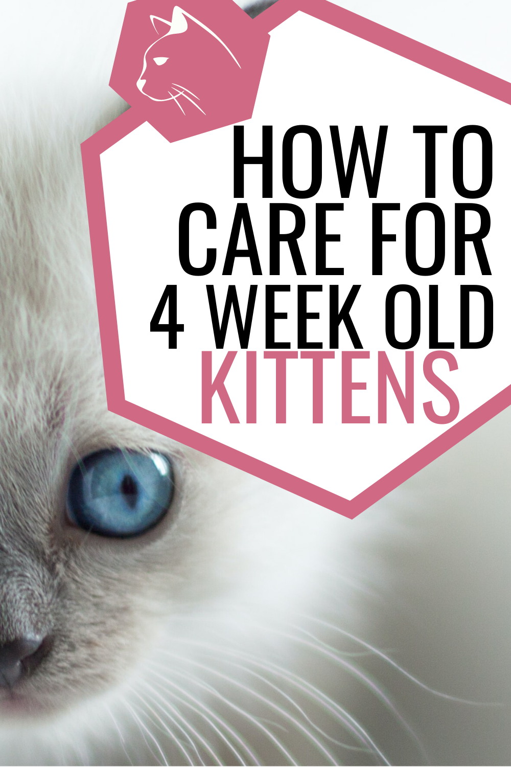 The Simple Guide To Caring For Four Week Old Kittens Live Long And Pawspurr In 2020 6 Week Old Kitten Kitten Care Newborn Kittens
