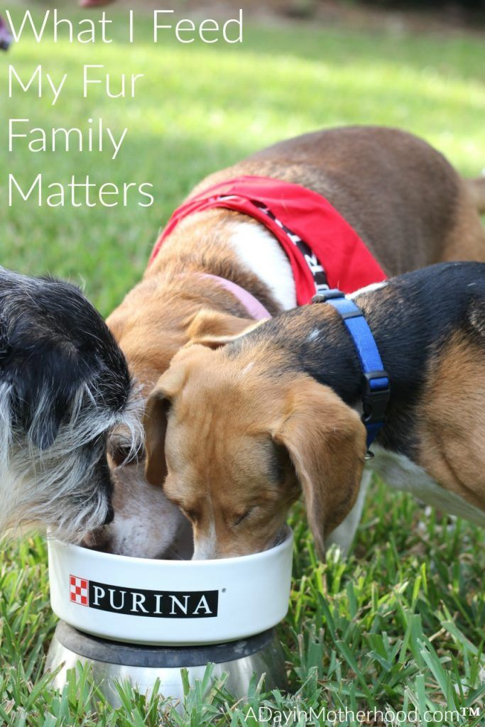 Three Hard Questions I Asked Purina Pet Gear Dog Food Recipes