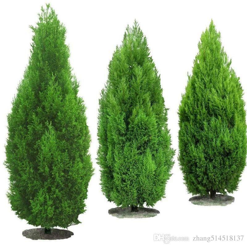 Imagem Relacionada Tree Seeds Trees To Plant Tree Free