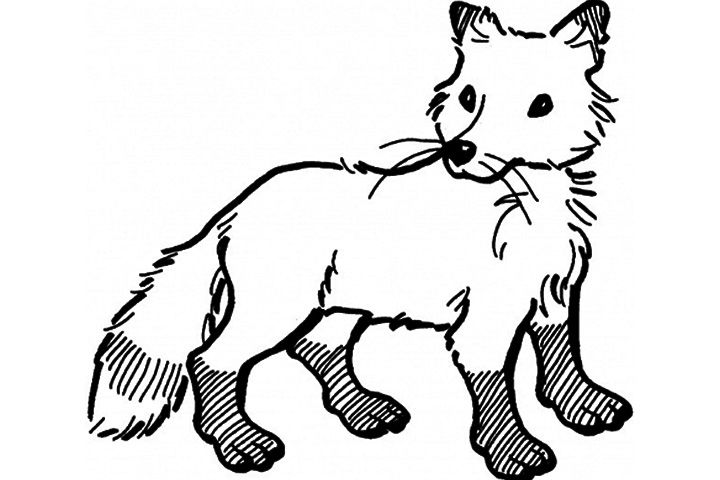 Top 25 Free Printable Fox Coloring Pages Online Animal Coloring