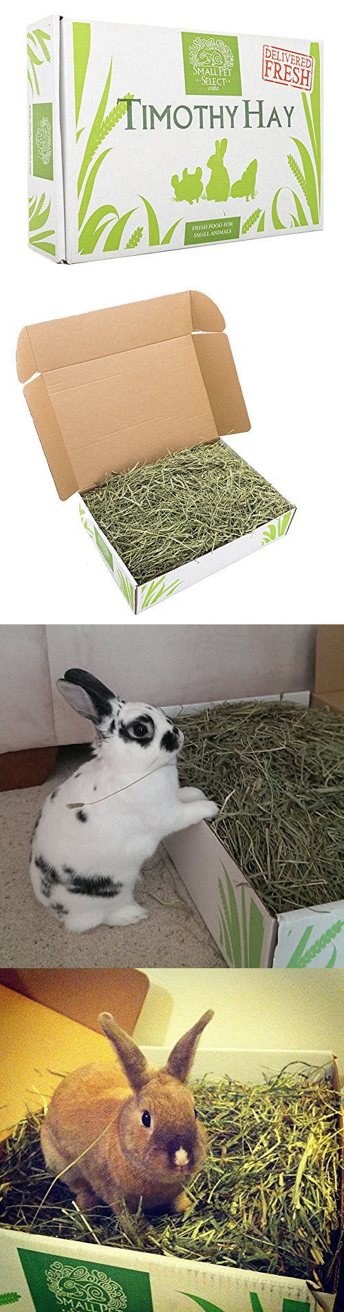 Food 100417: Small Pet Select 2Nd Cutting Timothy Hay Pet Food -> BUY IT NOW ONLY: $33.85 on eBay!