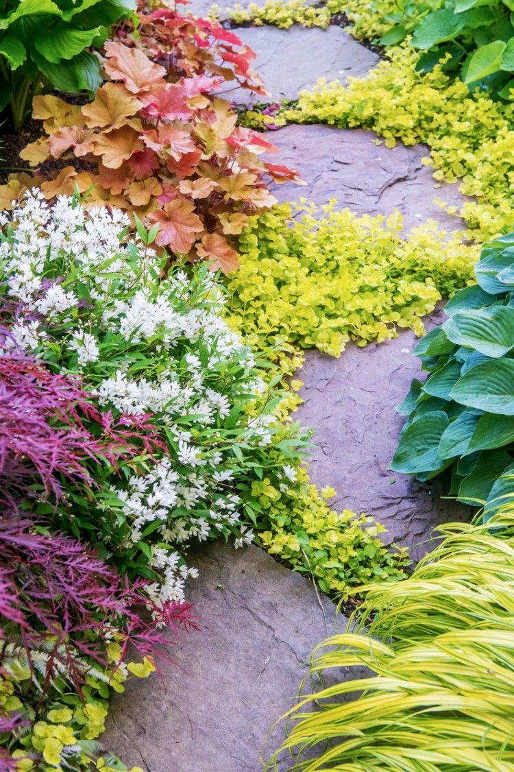 Bodendecker Zwischen Fugen Steinplatten Pfennigkraut Garden Shade Plants Plants Backyard Landscaping