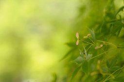 Листья, растения, природа, макро, зеленый, зеленый, цвета, размытие, фон