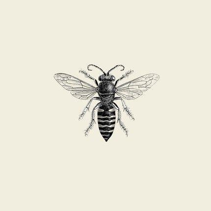 Vintage Entomology Illustration Vintage Honey Bee Illustration