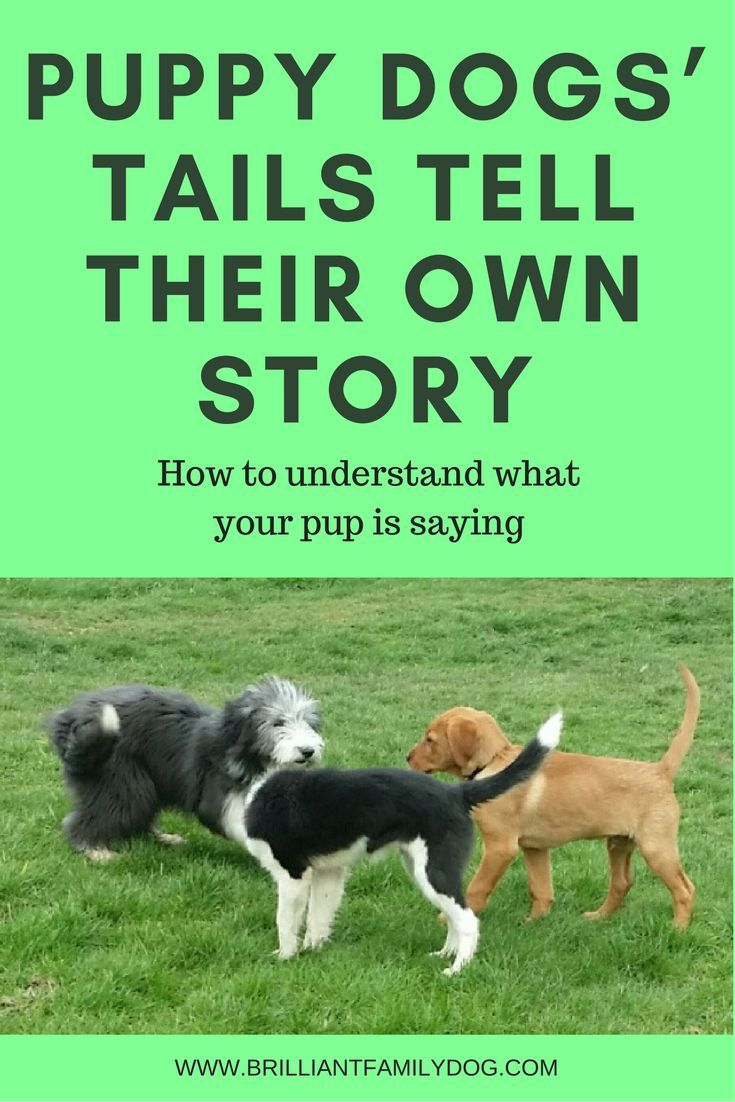 Puppy Dogs Tails Tell Their Own Story Dog Training Dogs