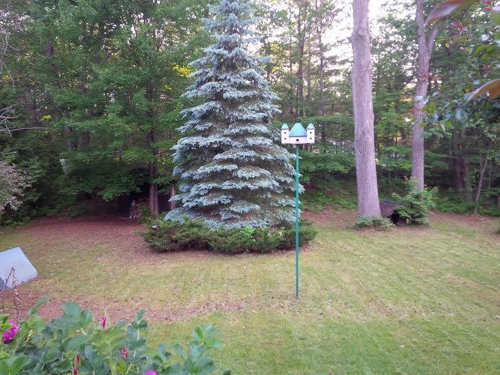 My actual Backyard #pinmydreambackyard