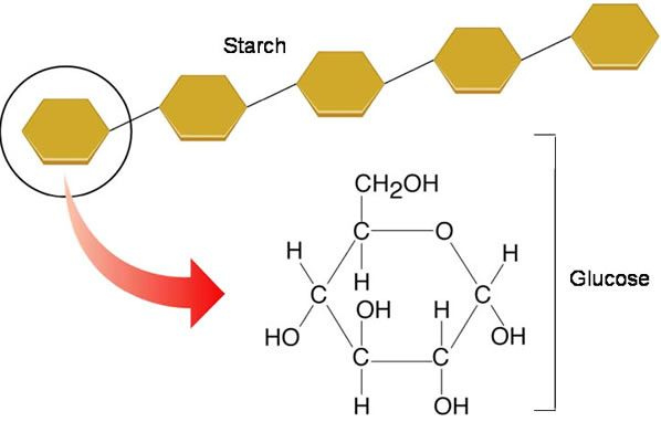 Understanding Of Polysaccharides Basic Nutrient Required For