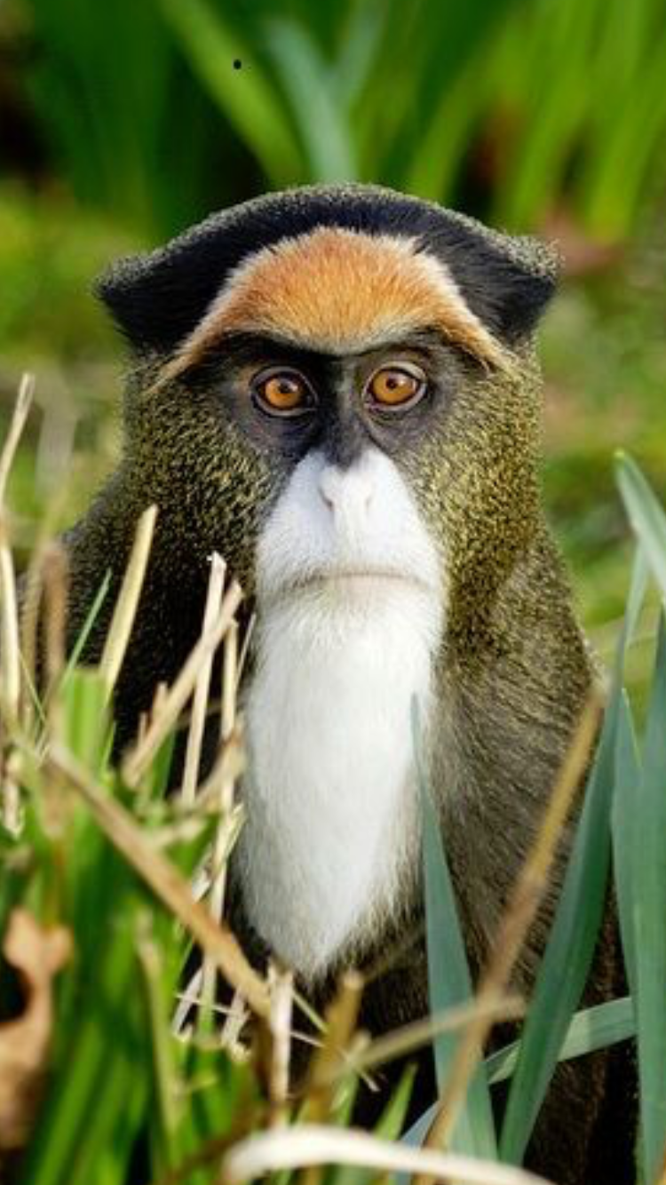 Beautiful colors for a monkey ️ Unusual animals