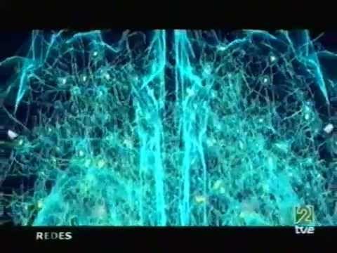 Antonio Damasio: El marcador somático: emoción-sentimiento - YouTube