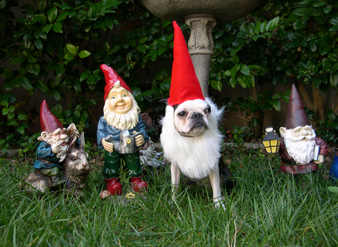 Gnomes - ha ha ha! Oh Oscar and Donner...I think I have the perfect Halloween costume for you boys!