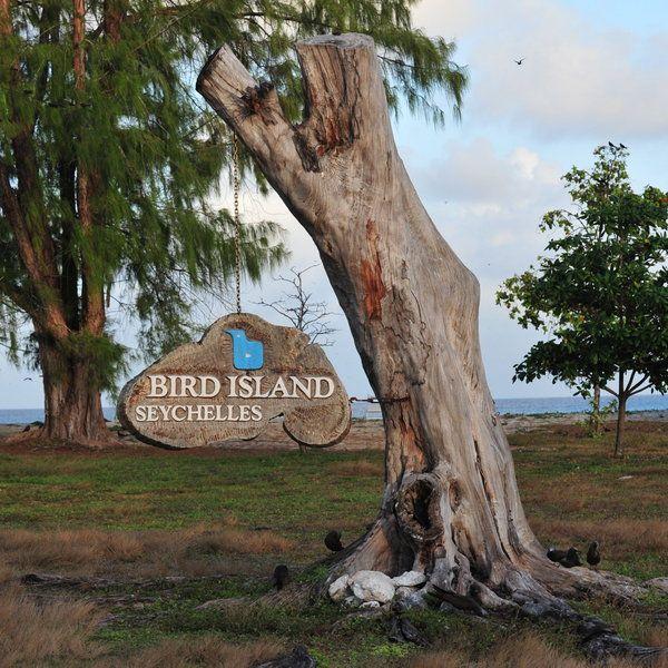 Seychelles Island Beaches: Bird Island, Island, Beach Holiday