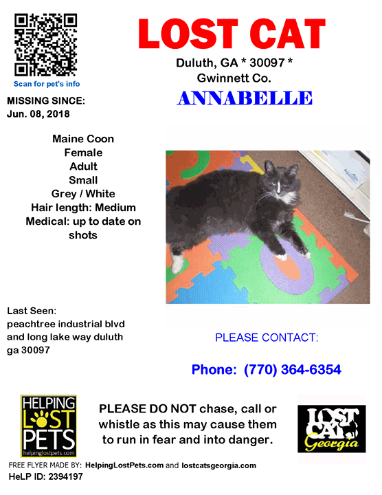 Lost Cat Duluth Georgia June 8 2018 Closest Intersection Peachtree Industrial Blvd Long Lake Way County Gwinnett Lostcat Lost Cat Losing A Pet Cats