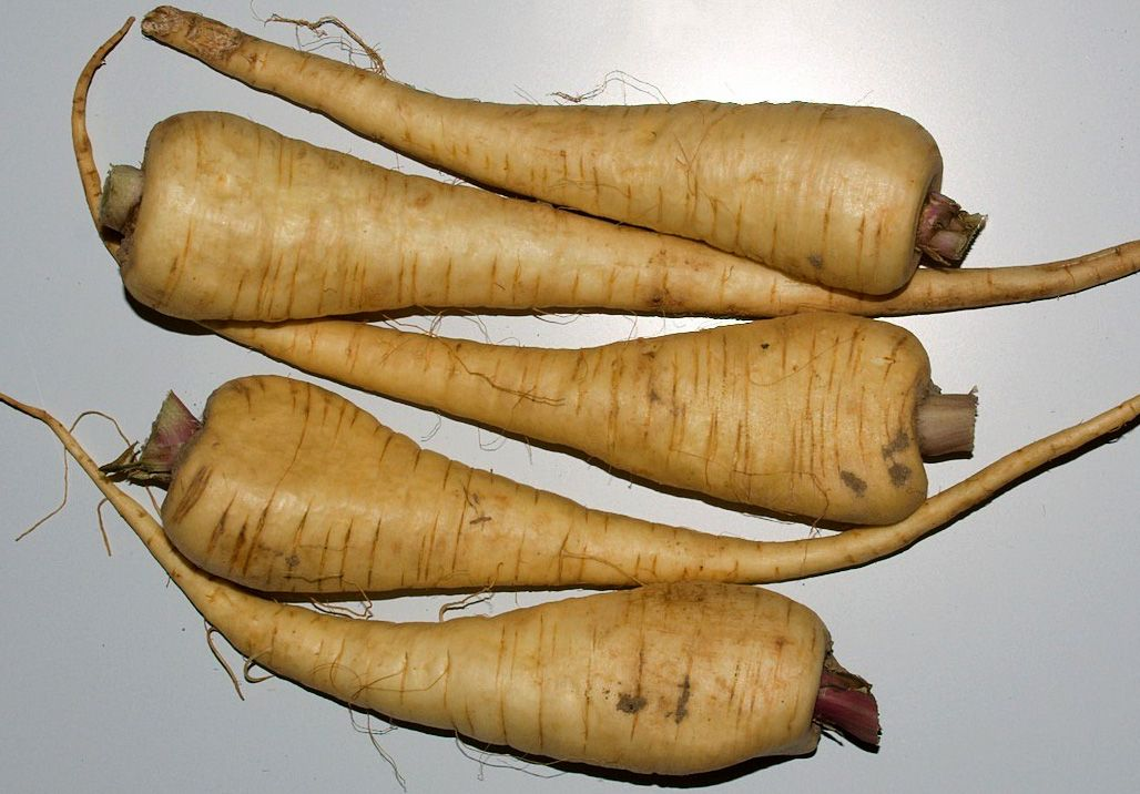 How to Grow Parsnips How to store radishes, Vegetables