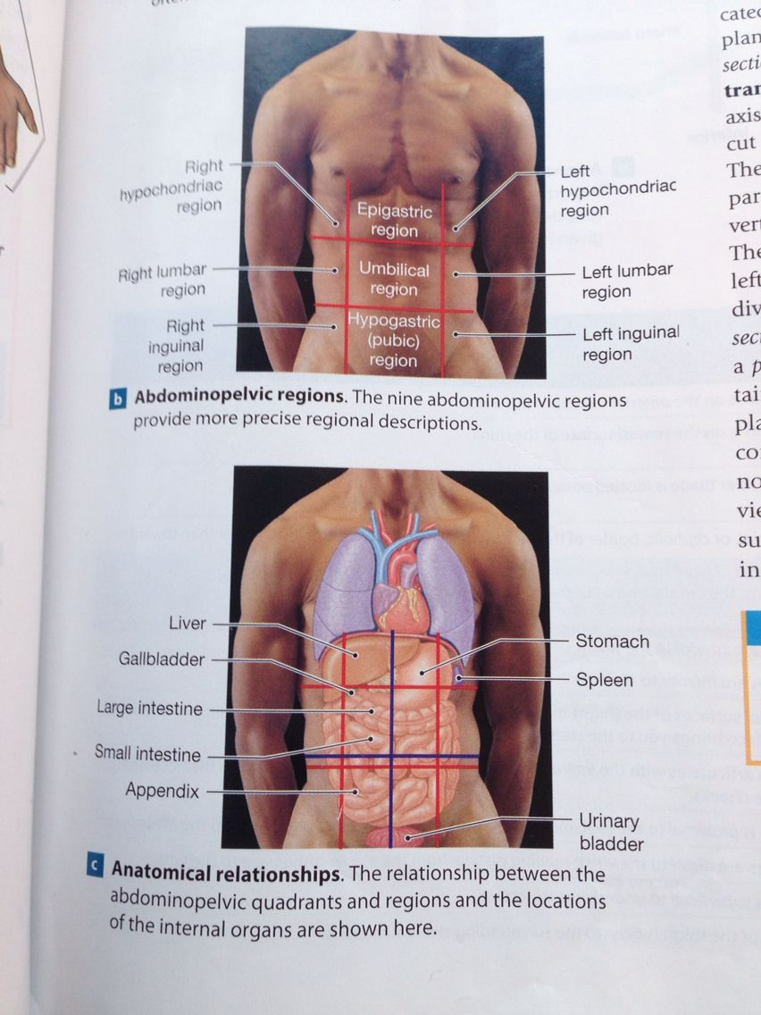 Andominopelvic quadrants and regions and their anatomical andominopelvic quadrants and regions and their anatomical relationships ccuart Choice Image