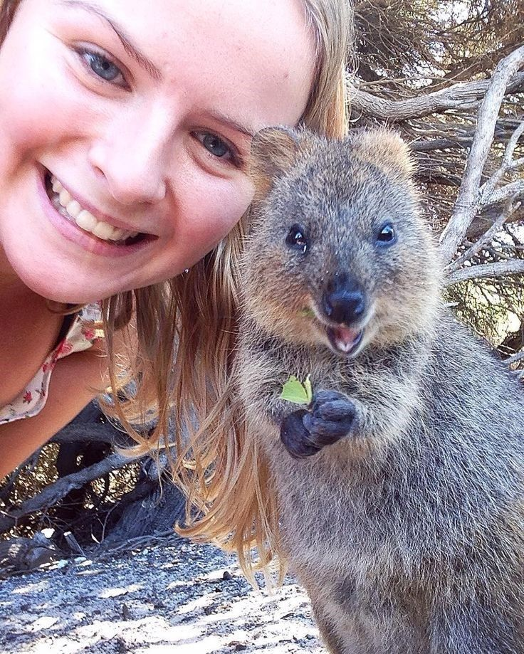 15 Quokka Selfies Too Cute to Ignore(画像あり) ペット, 動物, カワイイ