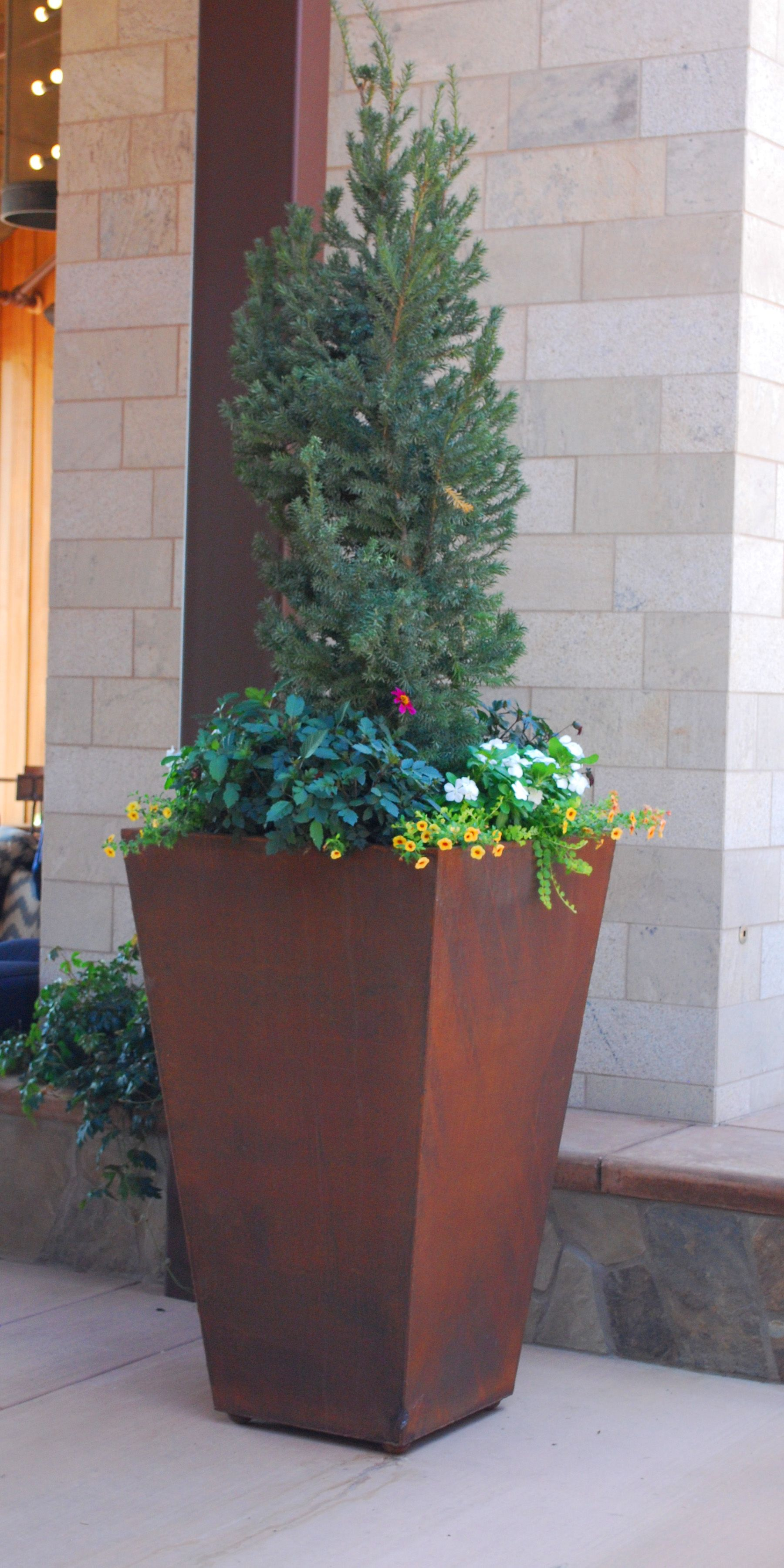 This is a 4 tall corten steel rusty planter bursting with blooms in